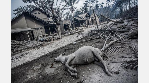 Salah satu dari rangkaian foto Kemal Jufri yang memenangi penghargaan World Press Photo 2011.