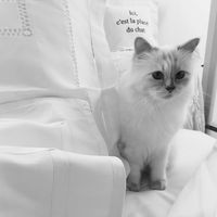 Karl Legerfeld Jual Boneka Mirip Kucingnya Seharga Rp 7 2