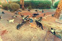 Kucing liar yang sedang mencari makan