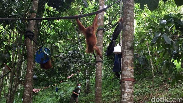 Dubes Amerika Kunjungi Pusat Orangutan di Deli Serdang