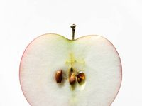 Biji Apel Mengandung Racun, Bagaimana Jika Termakan?