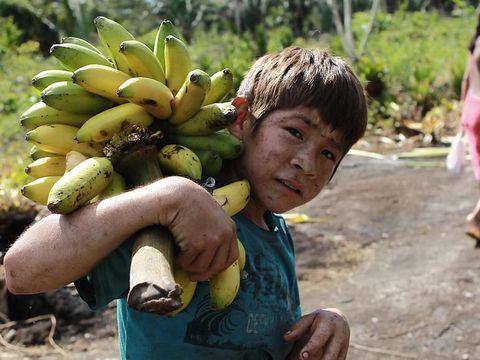 Anak Suku Indian di Amazon Memanen Pisang./Foto: Alice Kohler Photgraphy