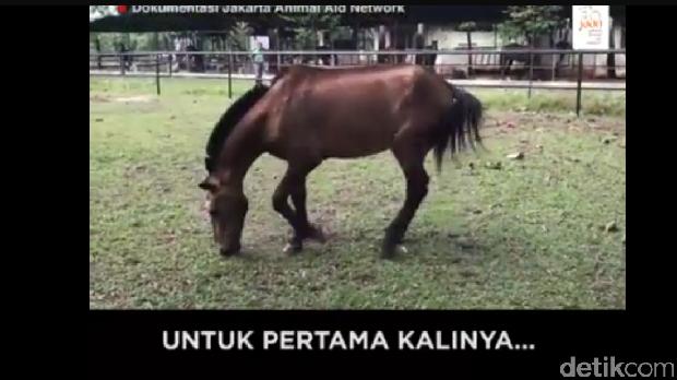 Mengharukan, Momen Kuda Chester Gembira Lihat Hamparan Rumput