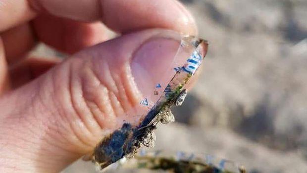 Plastik ini yang membuat tubuh ikan nampak 'terbelah'