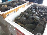 Bea Cukai Gagalkan Pengiriman 2.500 Kepiting Bertelur ke Taiwan