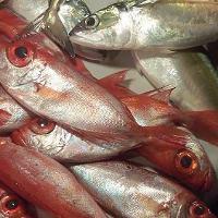 Pilihan Ikan yang Aman untuk Ibu Hamil