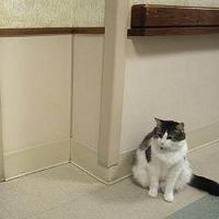 Kucing Mampu Deteksi Datangnya Kematian