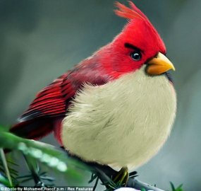 Real Birds of Angry Birds