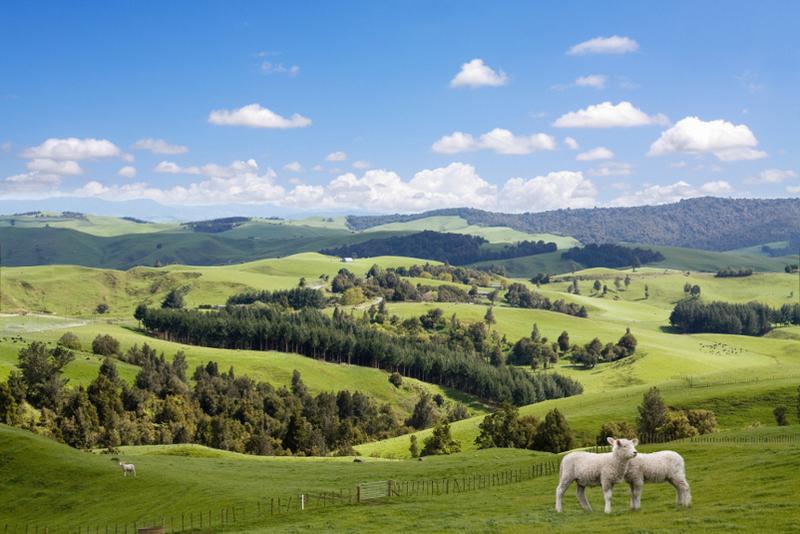 Selandia Baru Picture: Wisata The Hobbit Di Selandia Baru, Mau?