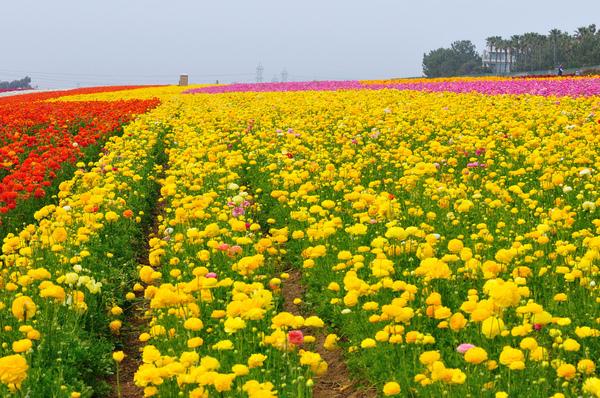 5 Lembah Bunga  Paling  Cantik  di Dunia 5