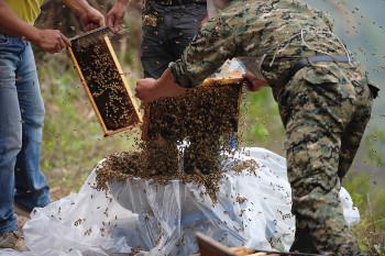 Foto-foto Aksi She Ping Berselimut Mantel Lebah Hidup