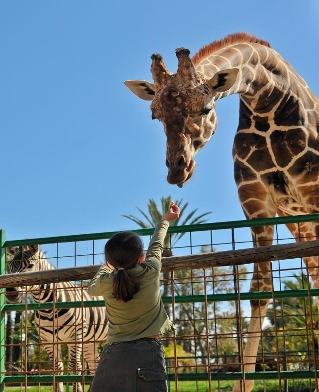 Takut Kebun Binatang