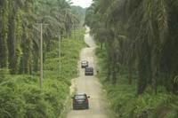 Perkebunan Sawit di Riau