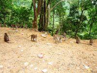 Jalur Pusuk yang ramai dengan monyet