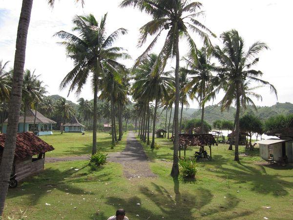 Pohon kelapa..salah satu ciri pantai dinegara tropis