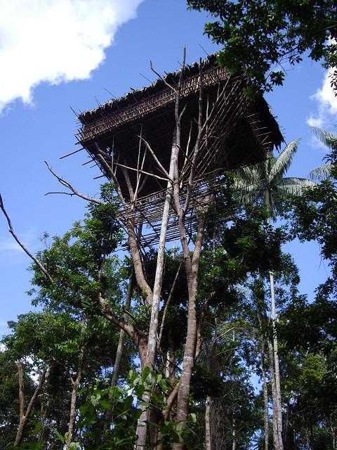 Rumah Pohon Suku Korowai (Erwin Yogaswara/ACI)