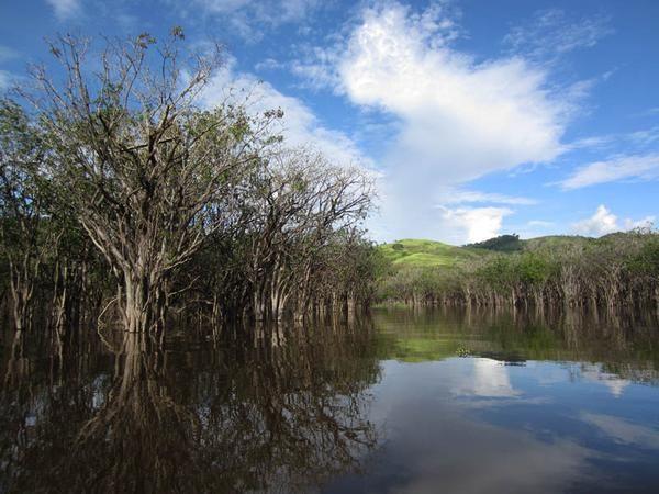 Danau Sentarum di kelilingi oleh bukit-bukit hijau dan ditumbuhi oleh kayu-kayu Putat. (Dwi Putri Ratnasari/ACI)