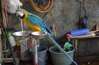 Rosella, burung cantik asal Belanda (dok. Sastri/ detikTravel)