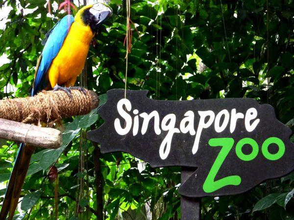 Selamat datang di Singapore Zoo!