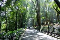 Rindangnya Taman Marga Satwa Muara Angke (Sumber: tourismindonesiaonline.com)