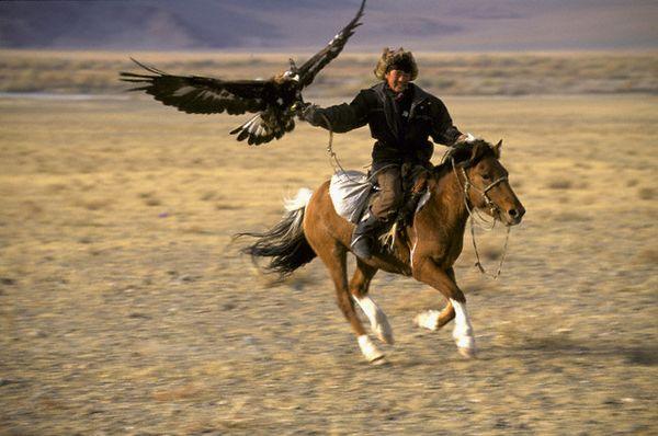 melihat aksi elang perkasa di mongolia 4
