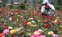 Warna-warni bunga (halomalang.com)