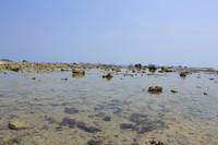 Batu karang di sekitar pantai