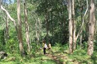 Medan hutan Mbeliling menuju Cuncarami
