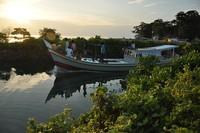 Jalan-jalan sore di hutan mangrove