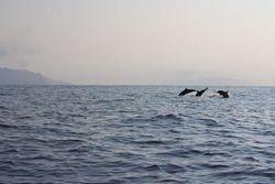 Mau Lihat Lumba-lumba, Silakan Datang ke Pulau Mare