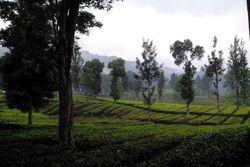 Kencan Adem di Puncak Bogor, Ini Pilihannya