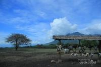 Tengkorak dan tulang banteng, yang menjadi spot foto bagi pengunjung
