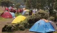 Membangun tenda di antara pepohonan