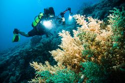 Foto Underwater Keren, Indonesia Tempatnya!