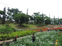 Taman bunga nan luas