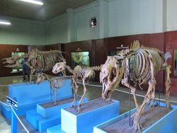 Jangan Lupa, Bogor Punya Aneka Museum Keren