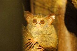 6 Hewan Ajaib dari Sulawesi Utara