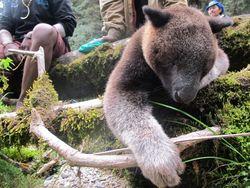Hari ke-8: Jangan Makan Lagi Kanguru Pohon Papua!