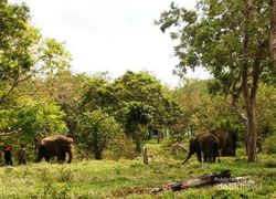 Way Kambas, Tidak Cuma Punya Gajah
