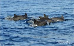 Pesona Teluk Kiluan, dari Lumba-lumba Sampai Laguna Keren