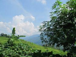 Nyeleneh, Desa Wisata di Vietnam yang Punya Ganja