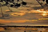 Berburu Emas di Pantai Sawarna