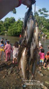 Festival Tangkap Ikan nan Unik di Sumatera Utara