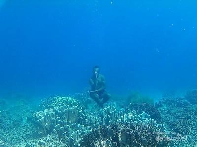 Pose Meditasi di Bawah Laut