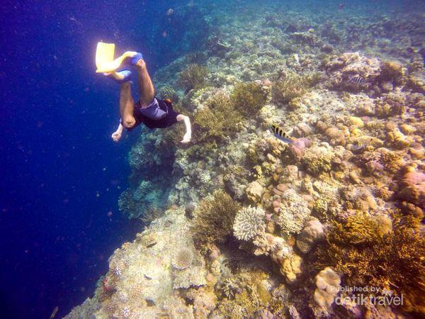 Menyelami Indahnya Alam Bawah Laut Pulau Menjangan