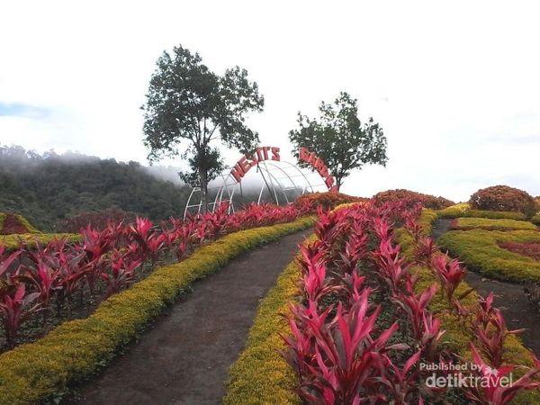 Ini Nih Taman Bunga Yang Lagi Hits Di Jambi