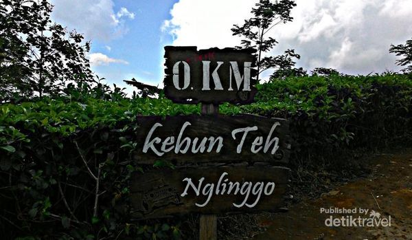 Kebun Teh yang ada di Dusun Nglinggo, Pagerharjo, Samigaluh, Kulon Progo, Yogyakarta. Perkebunan teh ini berada di ketinggian 800-1000 mdpl yang membentang cukup luas di Pegunungan Menoreh