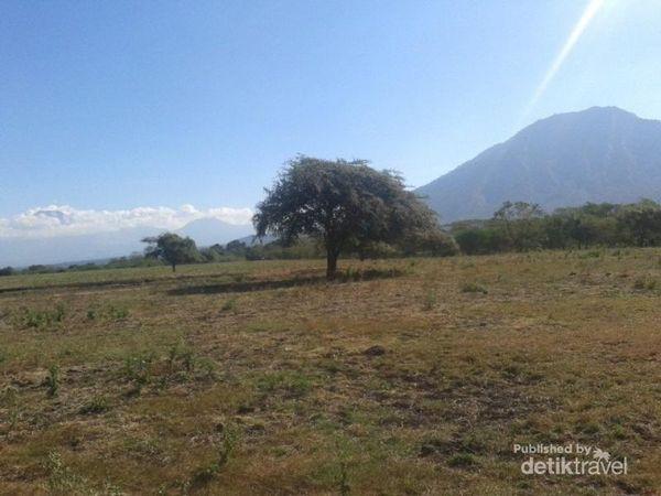 Taman Nasional Baluran, 'Afrika' Dari Jawa Timur