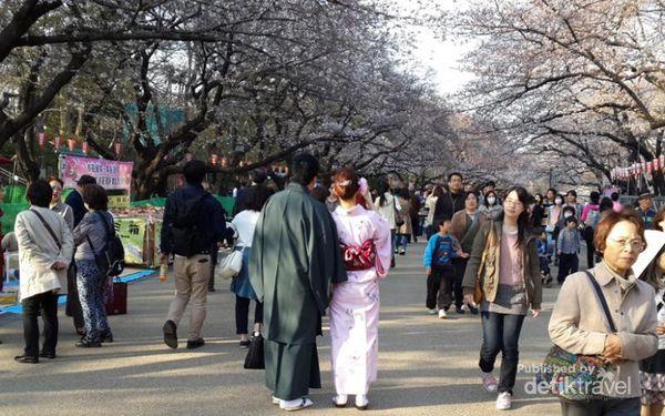 Mau Menikmati Sakura Di Jepang? Ini 5 Tempat Terbaiknya