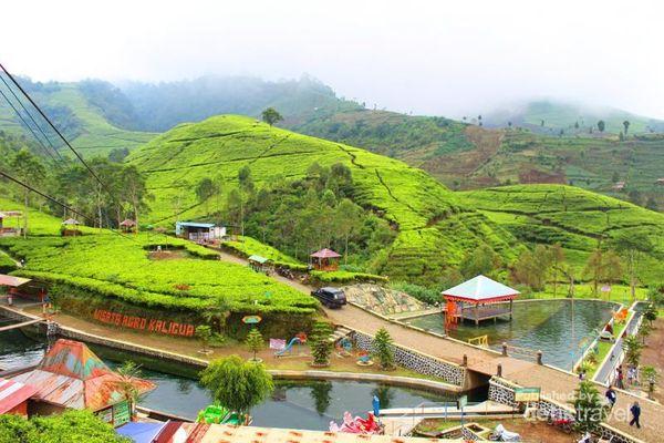 Agrowisata Kaligua, Spot Hijau Nan Asri di Lereng Gunung Slamet